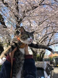 平成最後の桜_190406_0014.jpg