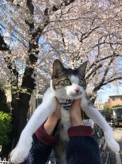 平成最後の桜_190406_0016.jpg